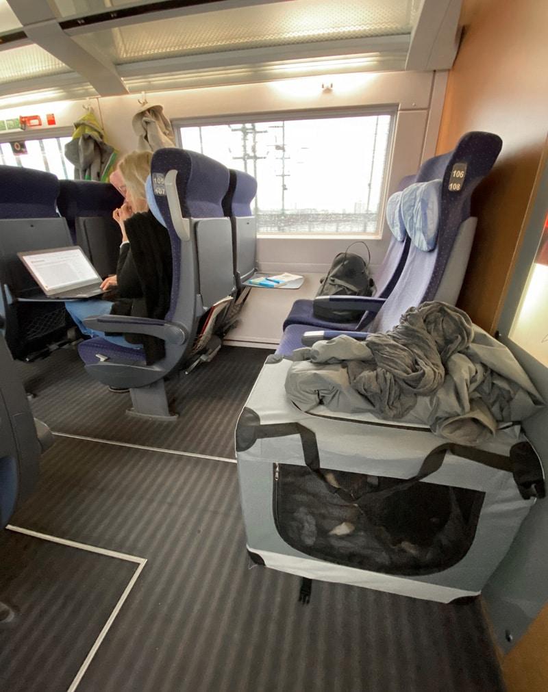 Reisen mit Hund im Zug - Reiseblog Bravebird
