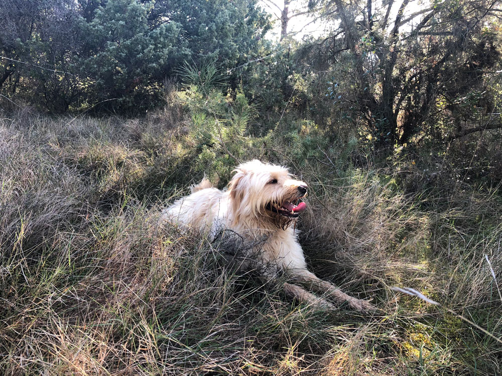 Urlaub in Languedoc-Roussilion - Reiseblog Bravebird