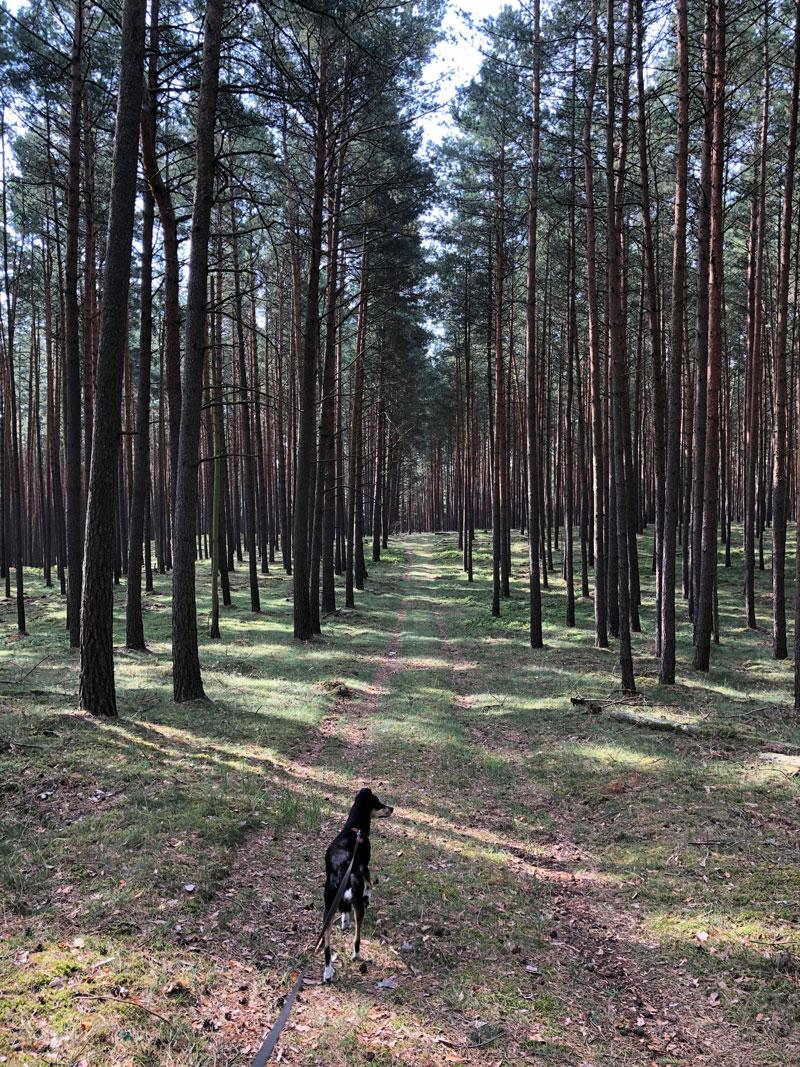 Labussee Campingplatz C24 - Reiseblog Bravebird