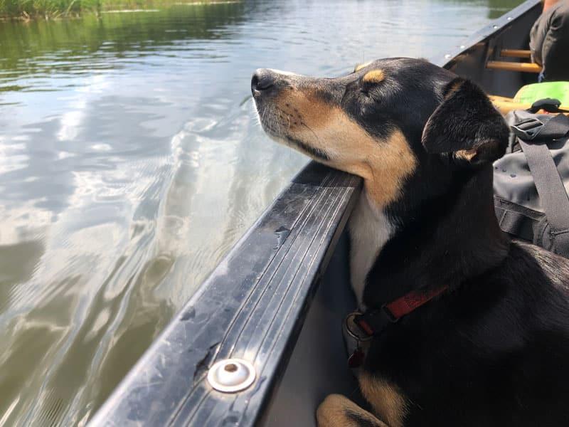 Kanutour mit Hund - Reiseblog Bravebird