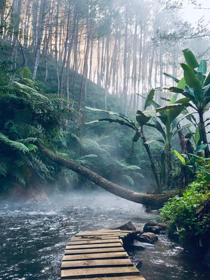 Regenwald nachhaltiges Konto - Reiseblog Bravebird