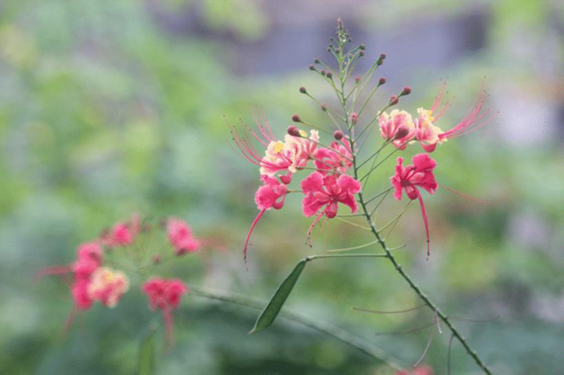 Madagaskar Pflanzen