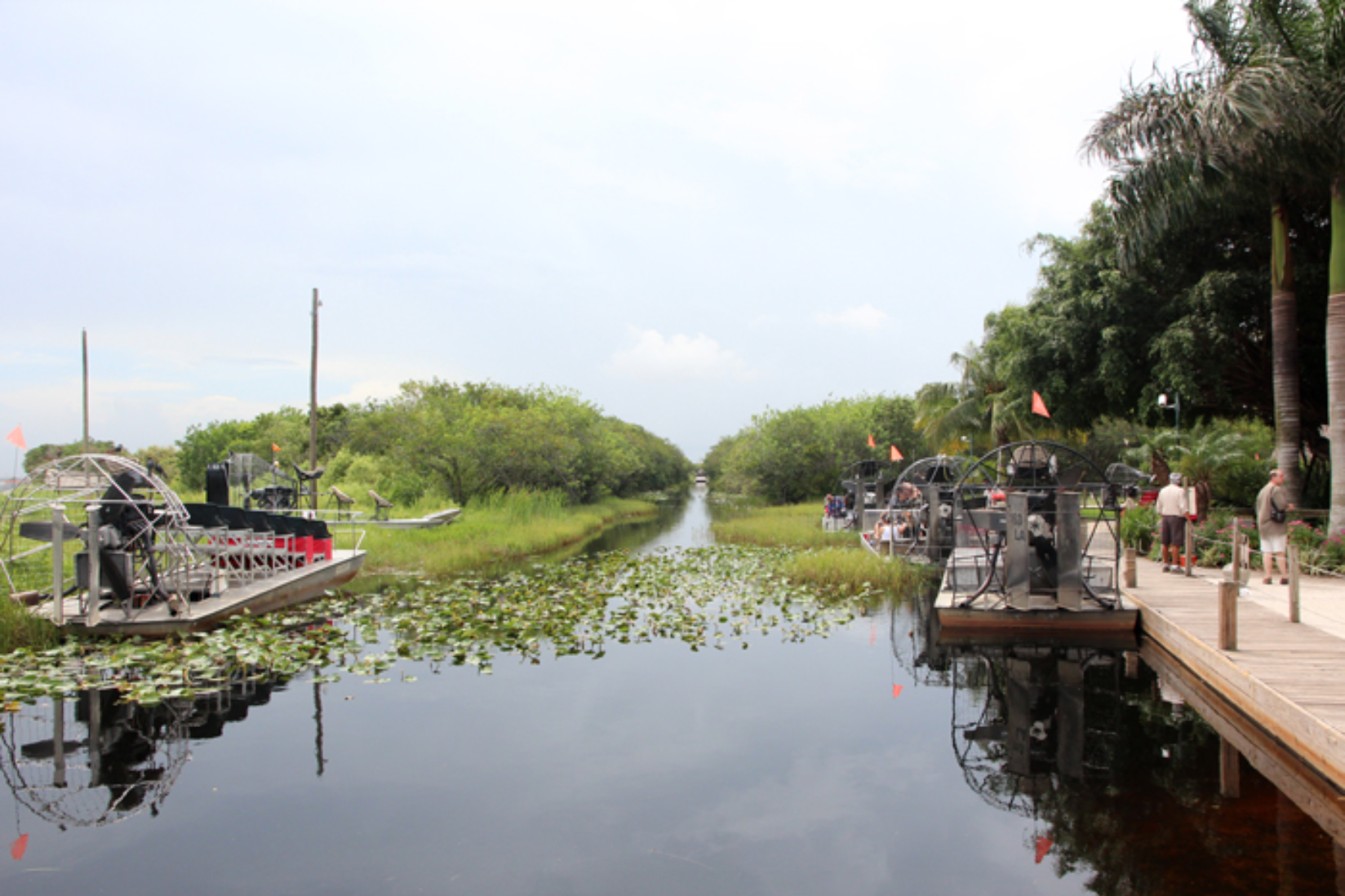 Everglades Bootstour