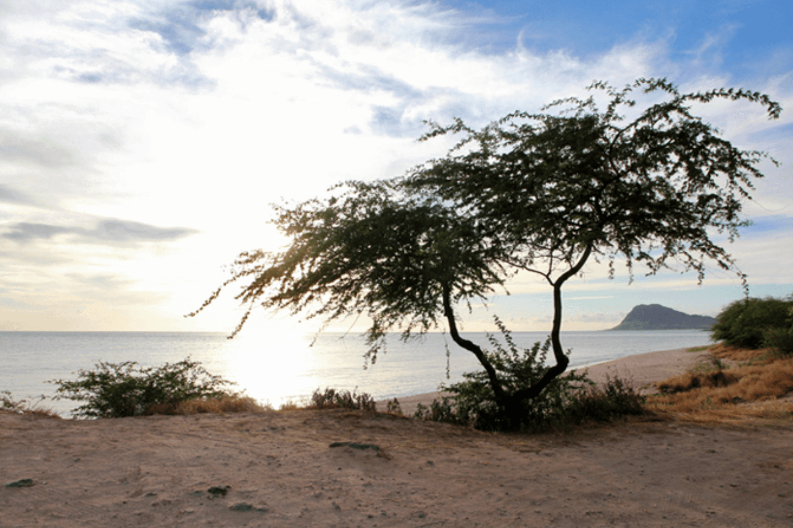 Hawaii Haleiwa Reise