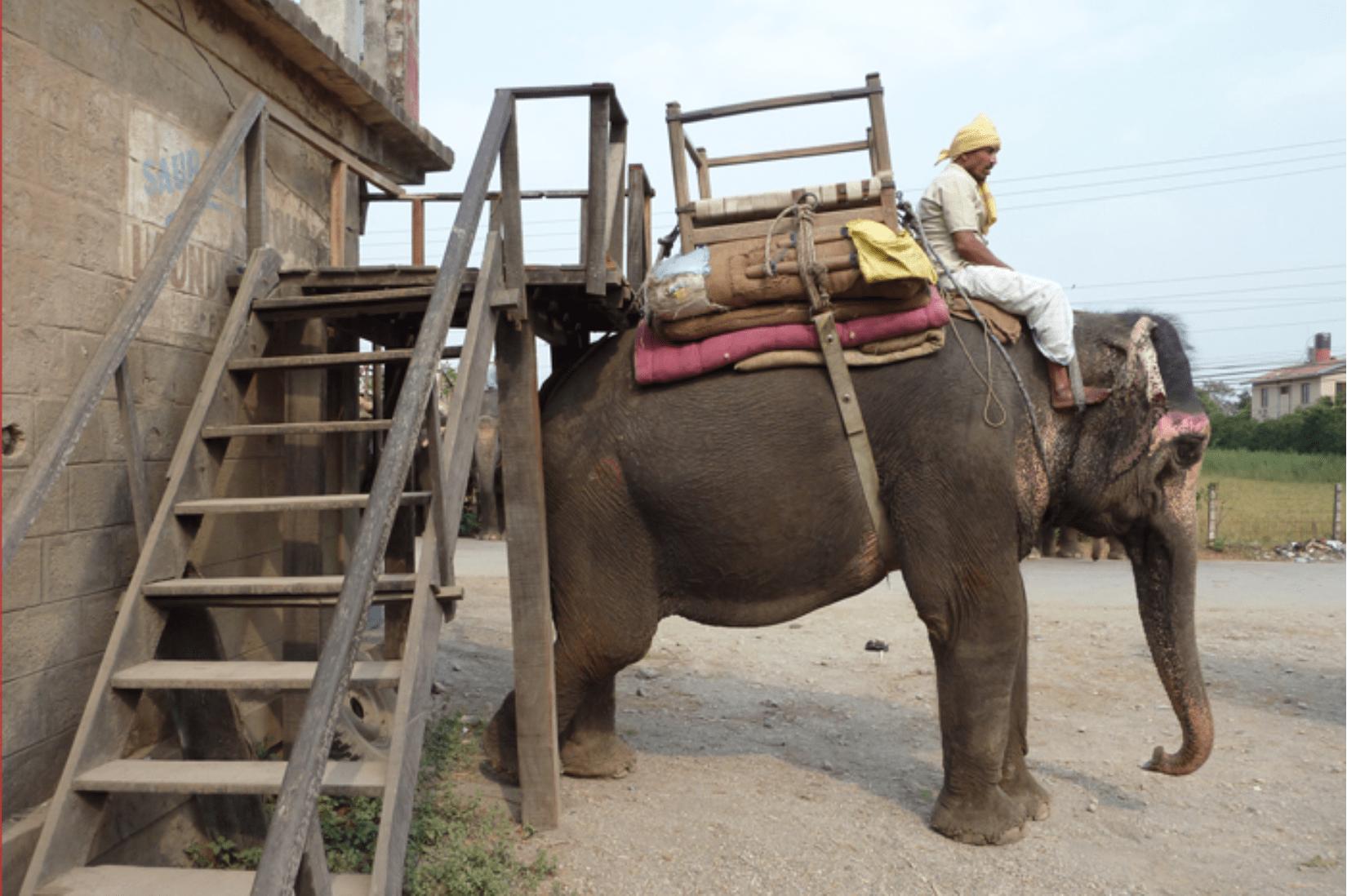 Chitwan Elefantenreiten
