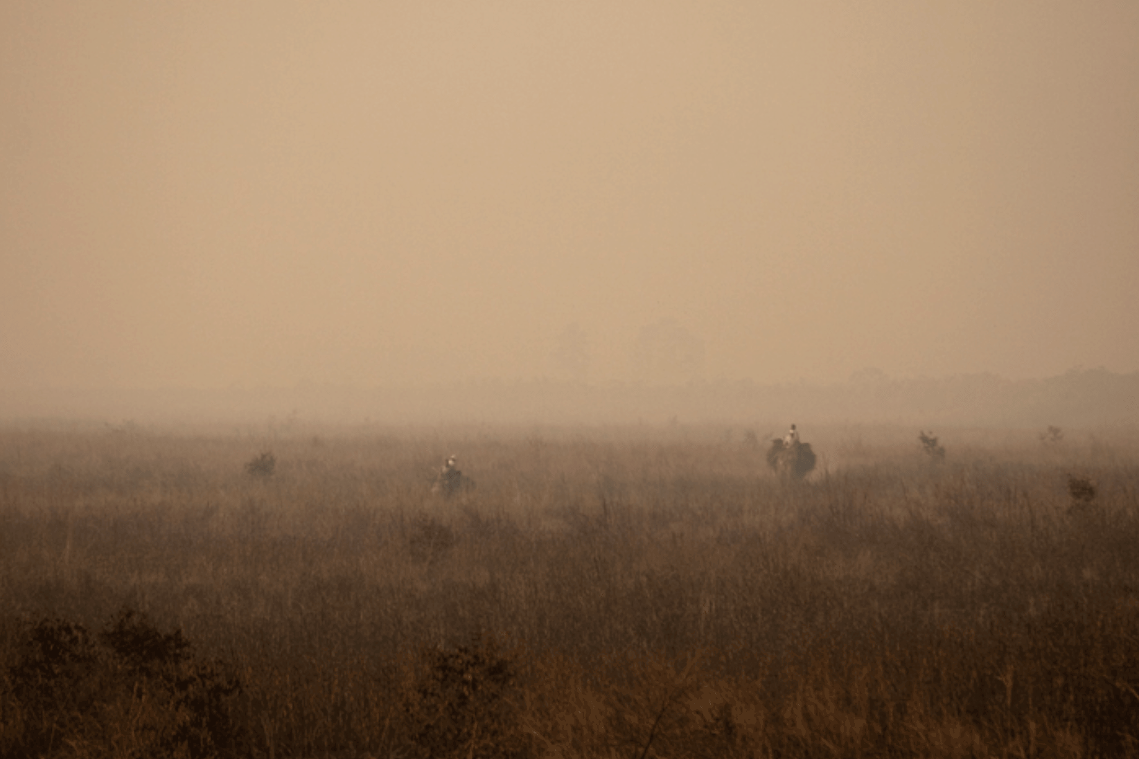 Chitwan Morgengrauen