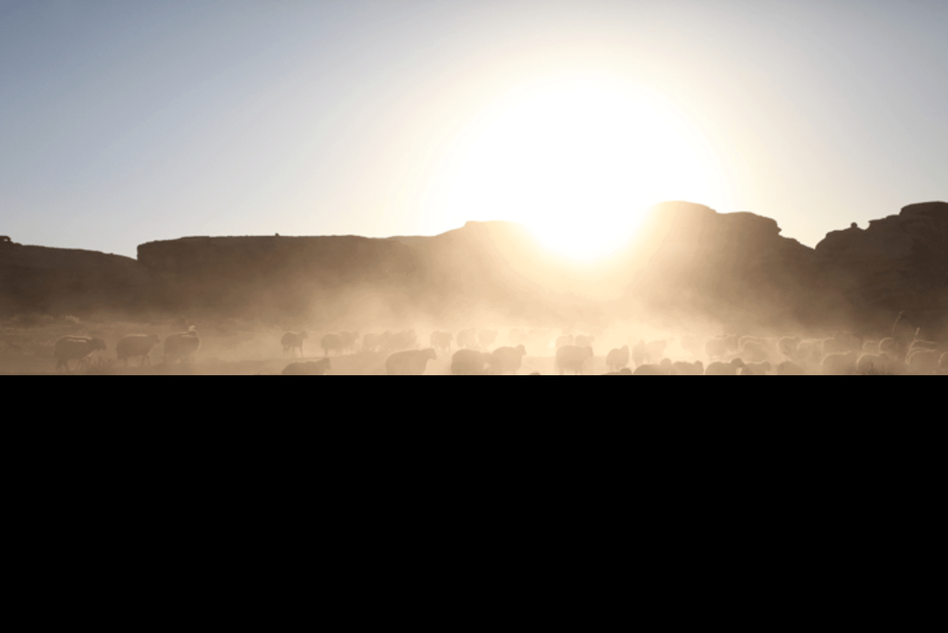 Wadi Rum Schafe