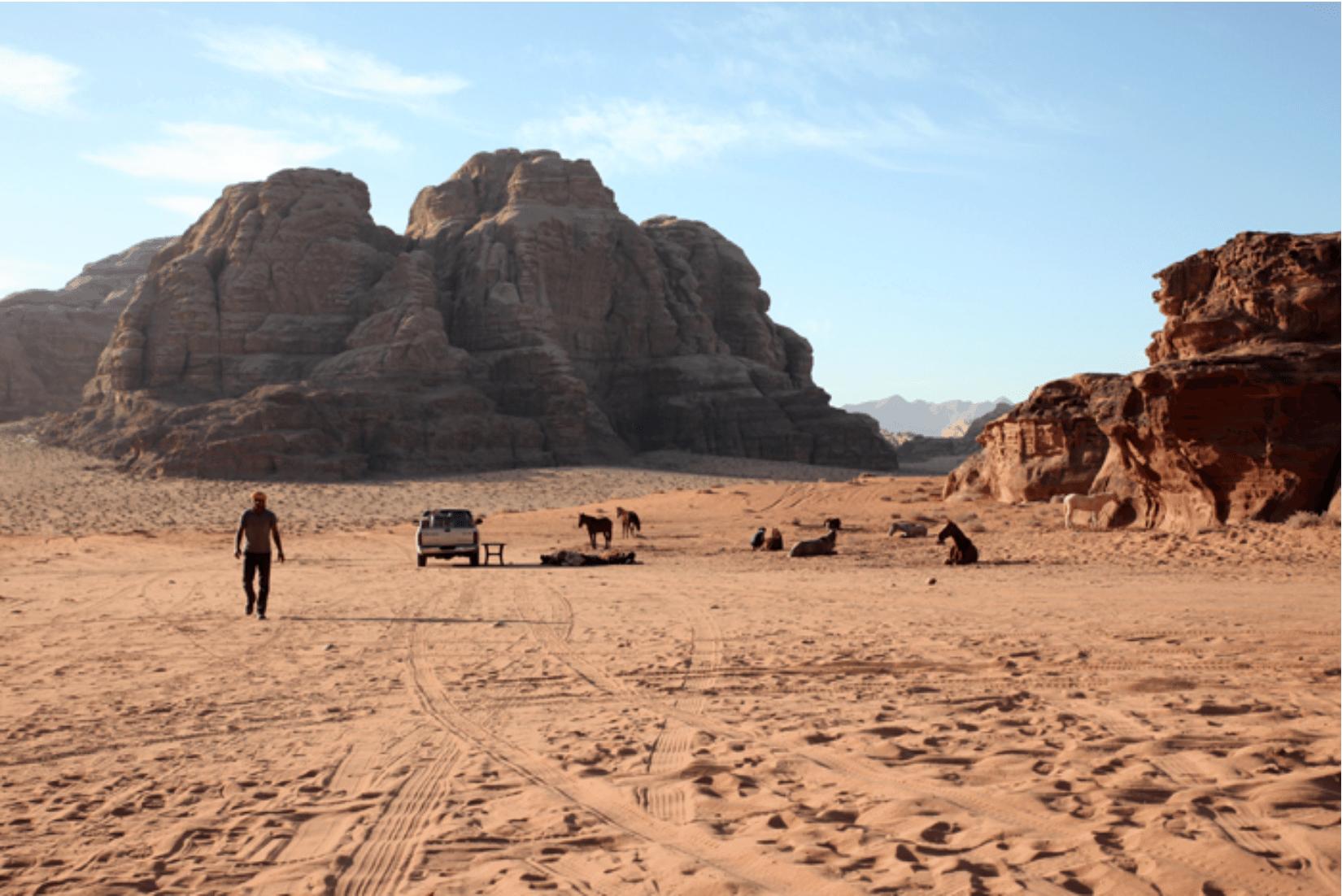 Wadi Rum Pferdetour