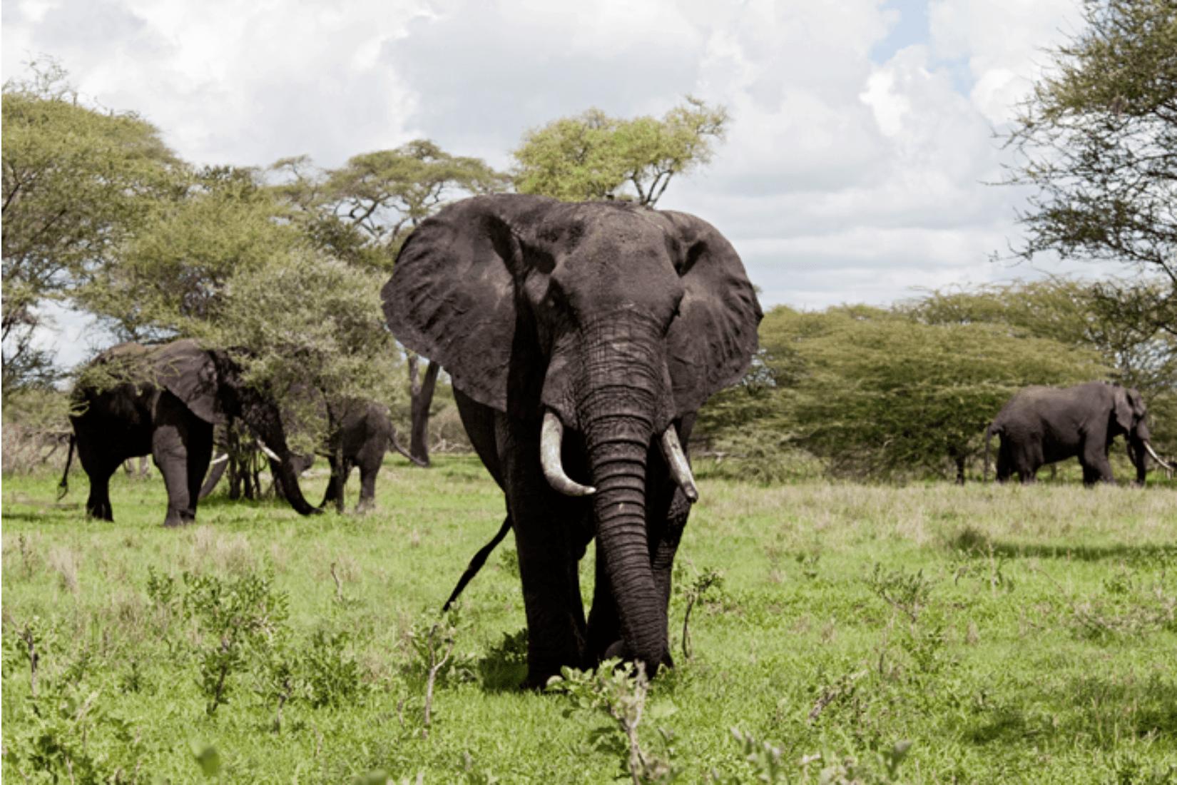 Arusha Park Reise
