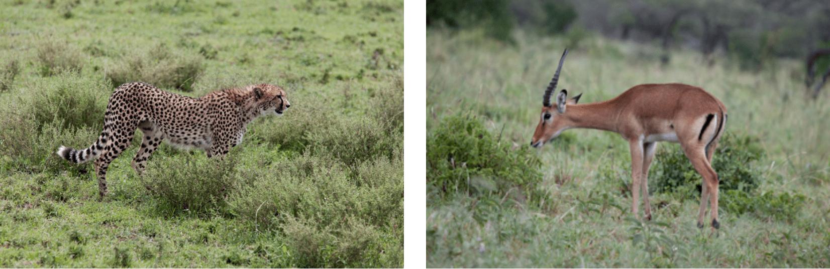 Ngorongoro Krater Reise
