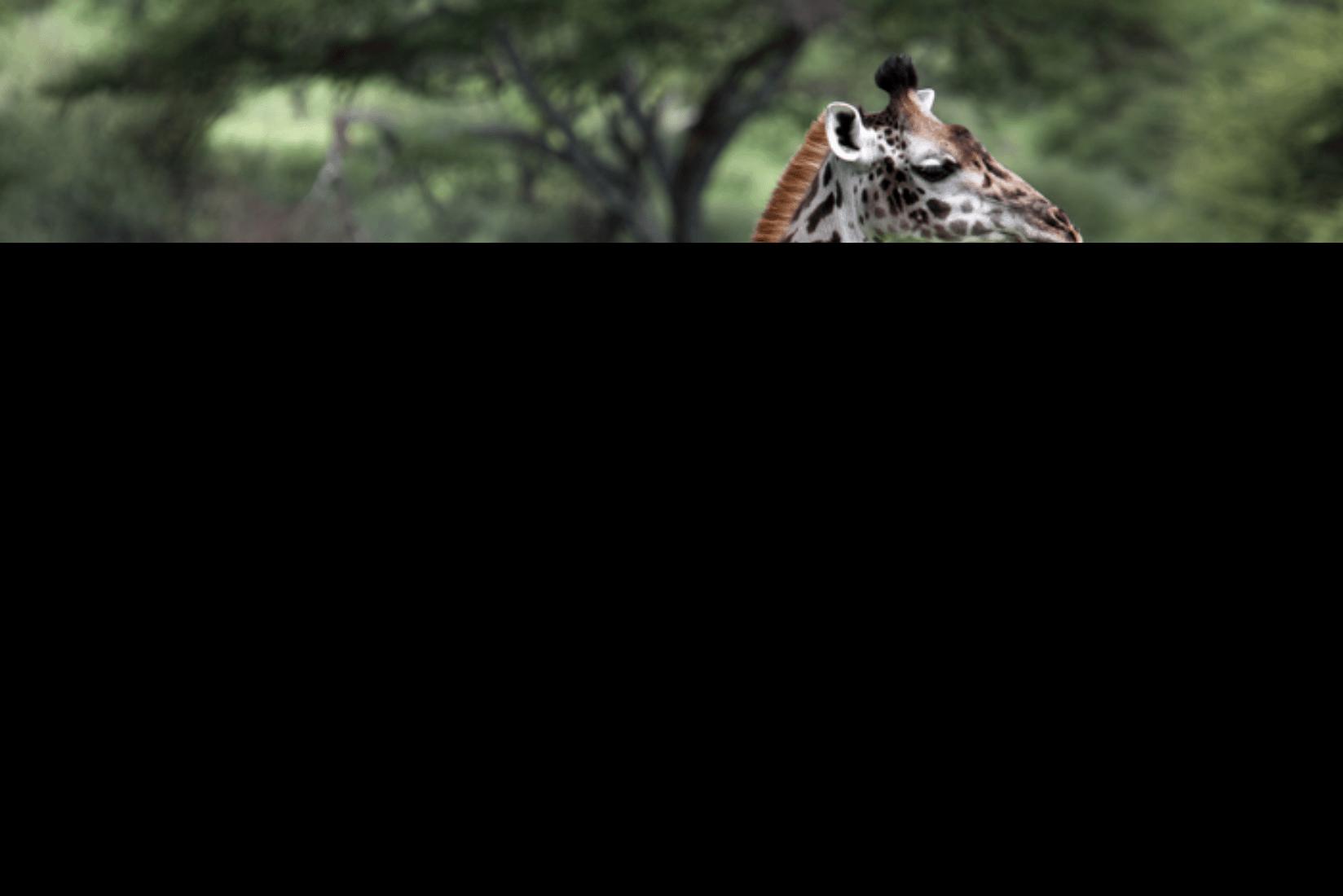 Serengeti Tierwelt
