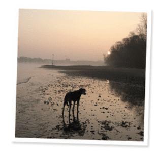 Spaziergang Hund