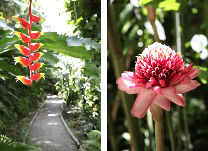 St. Lucia Blumen
