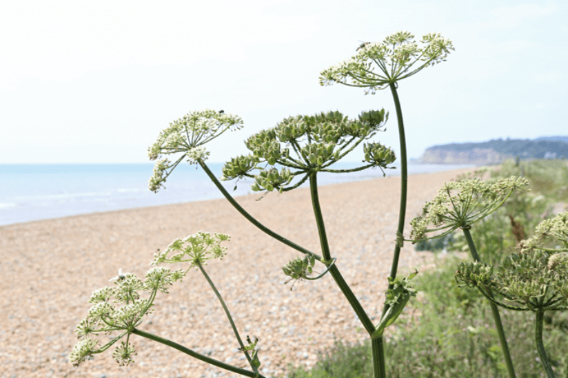 Südengland Strand