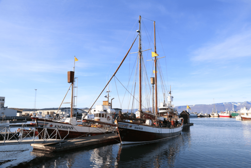 Island Husavik Wal Tour