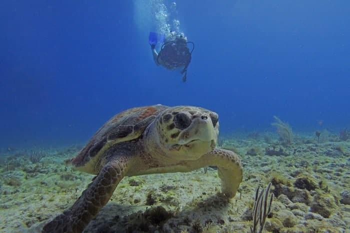 Tauchen mit Riesenschildkröte