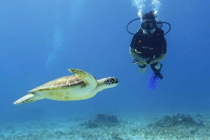 Tauchen Schildkröte Mexiko