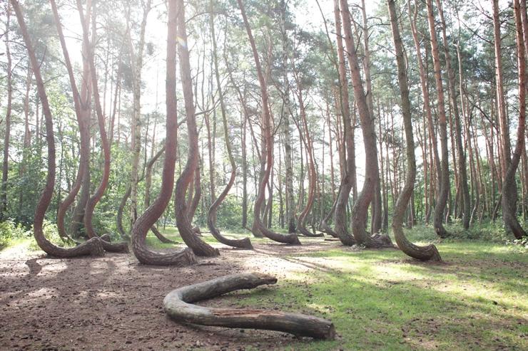 Krummer Wald in Polen